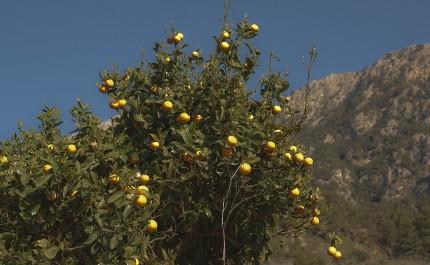 Wissen, das Früchte trägt